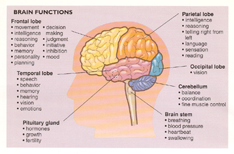 Brain & Personality (Biology) - Science